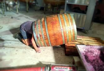 Décuvage des syrahs en vinifications intégrale en barriques au Mas Consolation