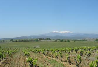 Le vignoble du domaine Puig-Parahÿ