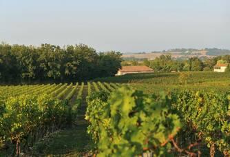 Les vignes du Domaine d'En Segur