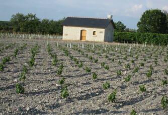Les vignes du Domaine de la Paleine
