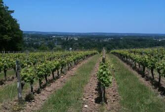 Vue sur les vignes au Domaine de la Paleine