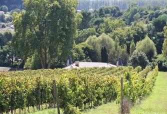 vignes du Château Laronde
