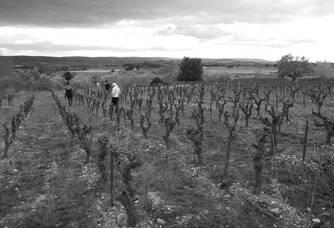 Vignes de la Calade de Saint Geniès