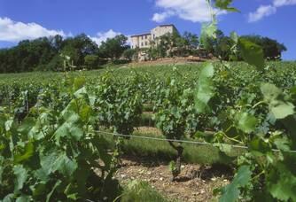 Au milieu des vignes du Château Salettes