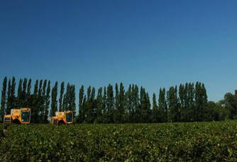 Activités viticoles au Domaine de l'Isle Saint Pierre