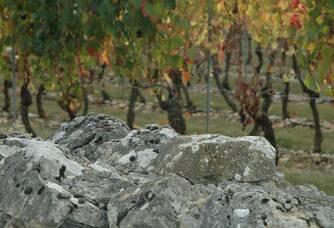 Les vignes derrière le muret du domaine des Roques de Cana