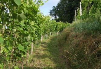 Vignoble de Les Pentes de Barène