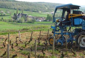 Travail dans les vignes du Château de Chamilly