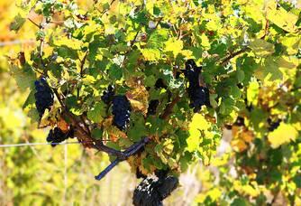 Vignes du Dôme d'Elyssas
