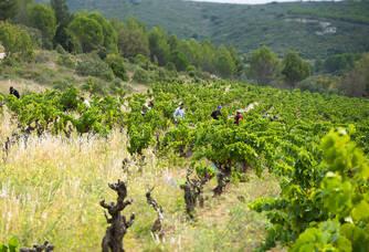 Vue sur les vignes au Domaine de la Dourbie