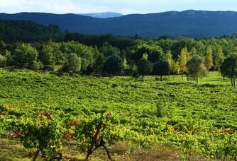 Le vignoble du Château Revelette
