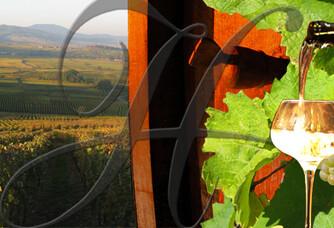 Le vignoble du Domaine Horcher