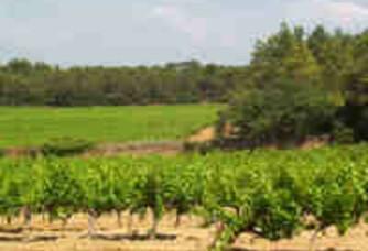 Les vignes du Domaine la Bastide