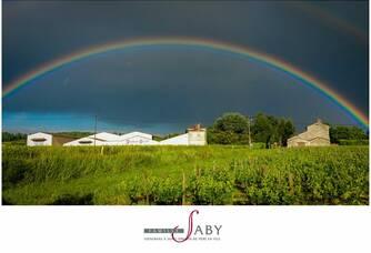 Arc en ciel dans les Vignobles Saby