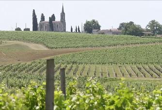 Les vignes de la Chapelle Bérard