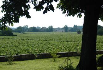 Le vignoble du Château Mauvinon