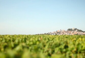 L'horizon autour du vignoble du domaine Joseph Mellot