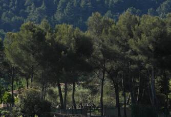 Le vignoble du Domaine de l'Olivette