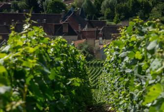 Au coeur des vignes du Champagne Marteaux Guyard