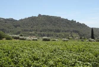 Le Castellet vu du Domaine de l'Olivette