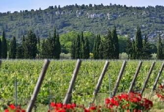 Le vignoble du Château Estoublon