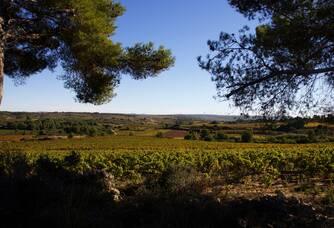 Superbe vue d'une parcelle du vignoble Haut-Blanville