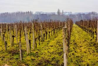 Le vignoble du Château Rouget