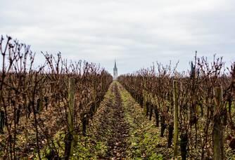 Vue entre les vignes du Château Rouget