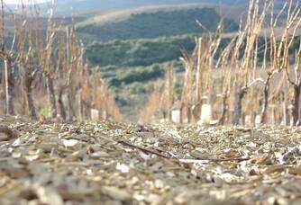 Les vignes du Domaine Cottebrune