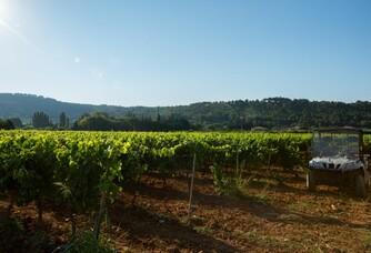 Les vignes du Domaine Pieracci