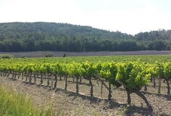 Vue des vignes du Domaine Rozel