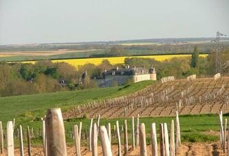 Les vignes du Domaine Tatin