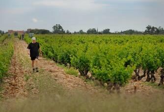 Serge Baux dans ses vignes