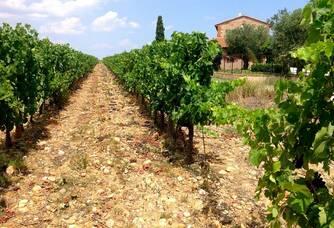 Une vue entre les vignes au Mas Baux