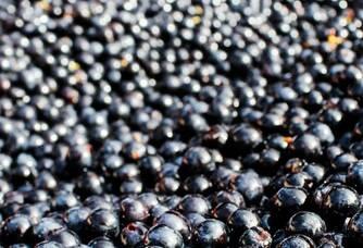 Les beaux résultats de la cueillette des vignobles Bardet